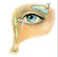 Occhio ed Annessi oculari, La Guida Completa