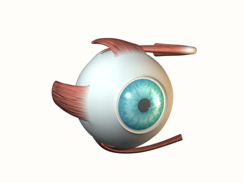 Animazione 3D OcchiO