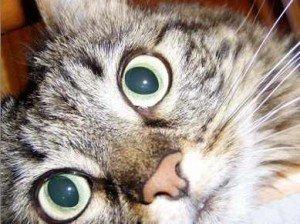 occhi-di-gatta
